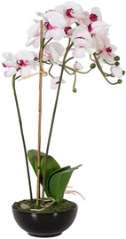 Home4you Orchid 3 In Garden H72cm White/Pink