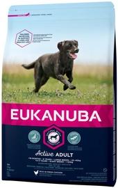 Kuiv koeratoit Eukanuba Active, 3 kg
