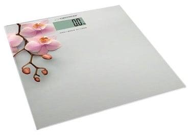 Esperanza Orchid EBS010
