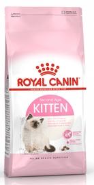 Royal Canin FHN Kitten 10kg