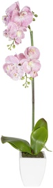Home4you Orchid 1 In Pot Double Knotted Yellow H75cm Pink/White