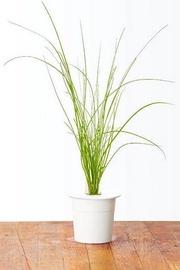 Nutiaia seemned Click & Grow, murulauk, 3 tk