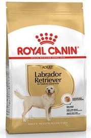 Royal Canin BHN Labrador Retvrievier Adult 3kg