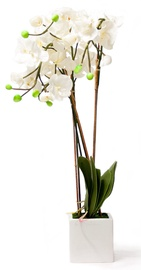 Home4you Artificial White Orchid Whit Pot H88cm