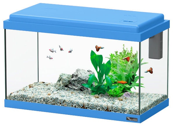 Aquatlantis Funny Fish 50 Blue