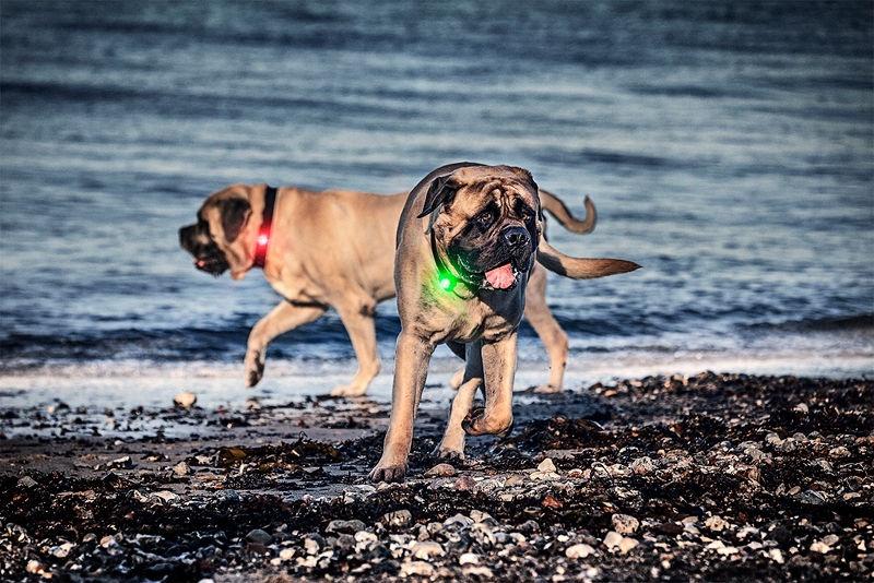 Orbiloc Dog Dual Safety Light Black/Yellow