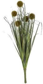 Home4you Bouquet Herbarium 5pcs In Garden H59cm Dark Green 83854