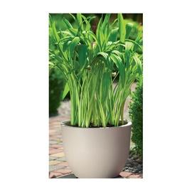 SN Muna Round Flower Pot 34.5cm Brown