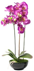 Home4you Light Pink Orchid 3 Long Knotted H72cm