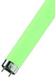 Osram Lumilux Lamp 18W G13 Green