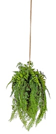 Home4you Buxus Hanging Plant In Pot H55cm