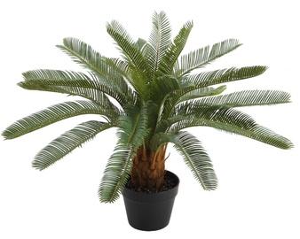 Home4you Rubber Cycas Plant 70cm