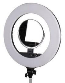 StudioKing LED Ring Lamp LED-480ASK