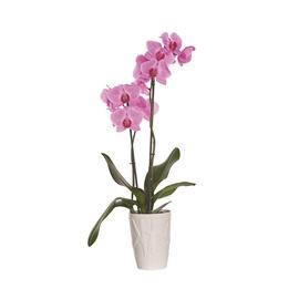 Orhideepott d13 mosch0013-610