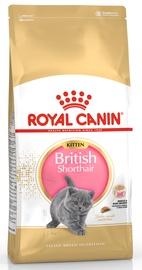 Royal Canin FBN Kitten British Shorthair 10kg