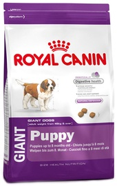 Royal Canin SHN Giant Puppy 15kg