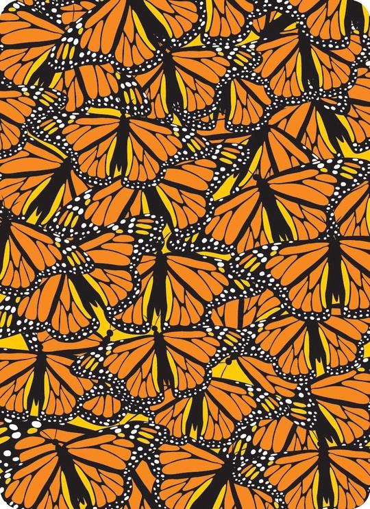 4FUN Coolmax Monarch Scarf